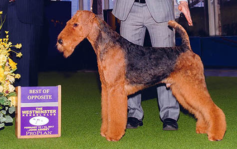 Merlin - INT AM GCH JOVAL MUST BE MAGIC